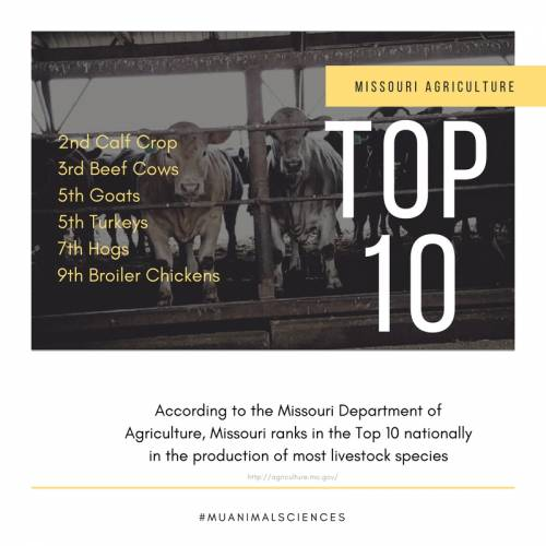 According to the Missouri Department of Agriculture, Missouri ranks in the Top 10 nationally in the production of most livestock species