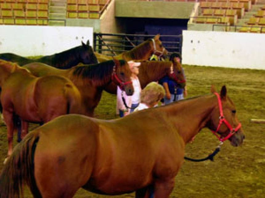 Division Of Animal Sciences Equine Therapy